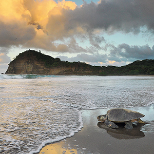 turtles in nicaragua