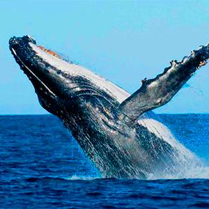 whale views nicaragua